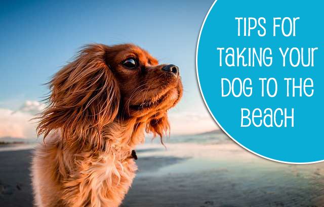 Tips for Bringing Your Dog to the Beach