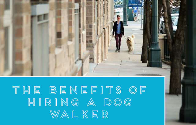 Benefits of Hiring a Dog Walker