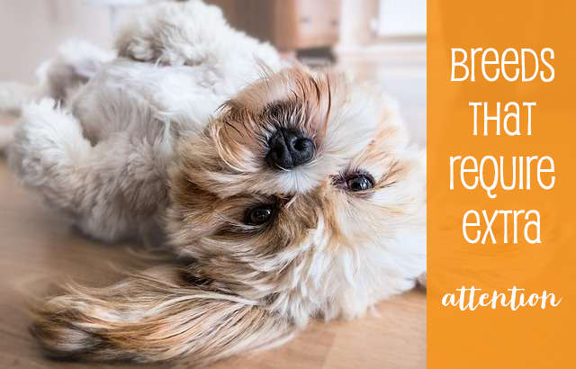 Breeds that Require Some Extra Attention