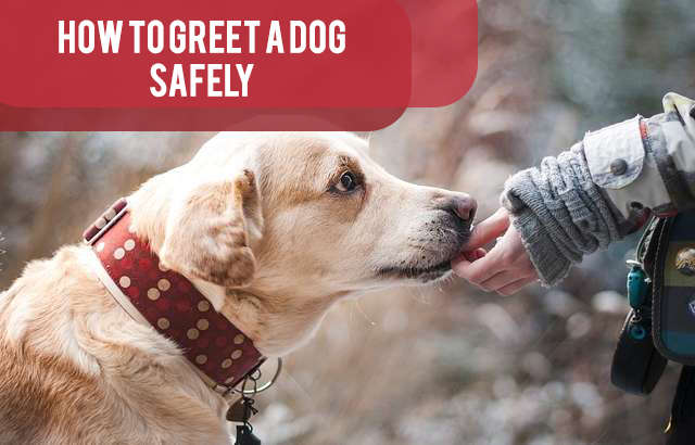 How to Greet Dogs Safely