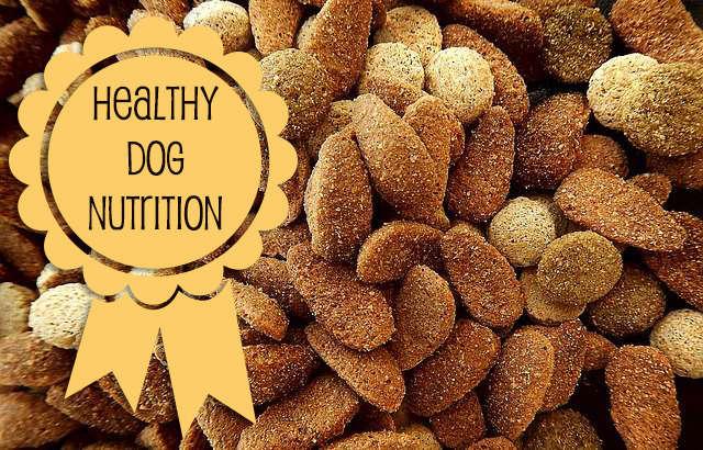 Healthy Dog Nutrition