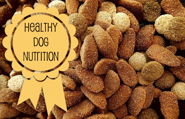 Healthy Dog Nutrition
