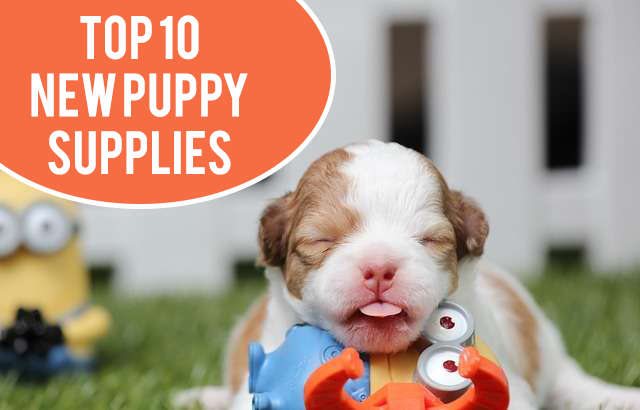 Top 10 New Puppy Supplies