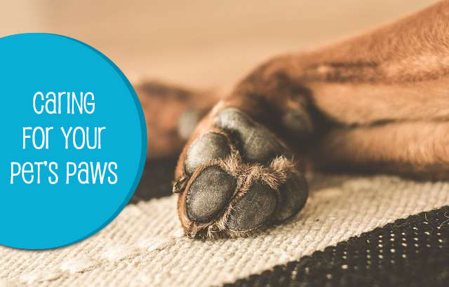 Caring for your Dog's Paws